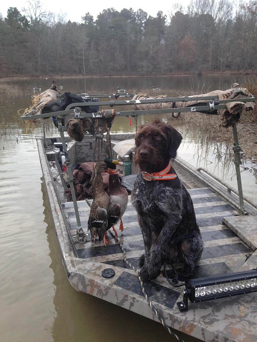 Best Duck Dogs